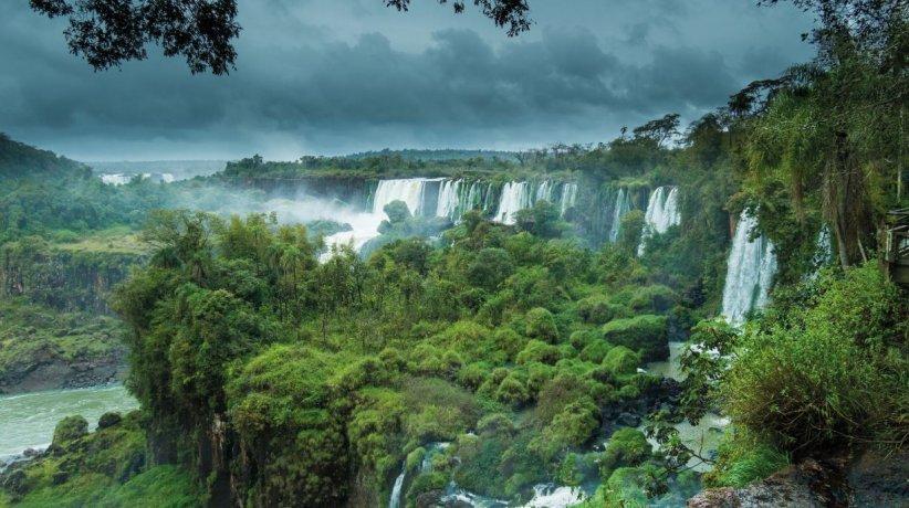 Selva Iguazú 2020