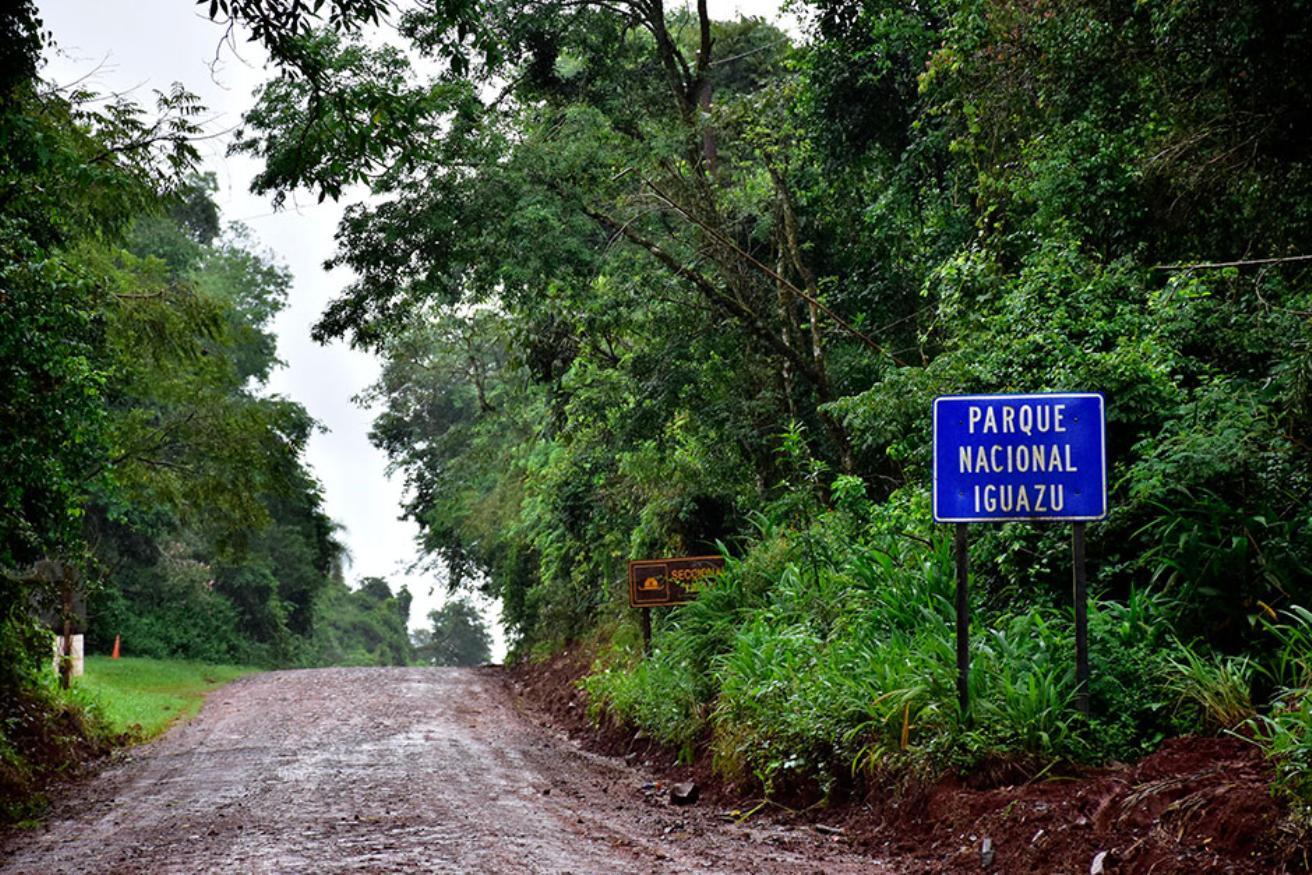 Iguazú Flora y Fauna