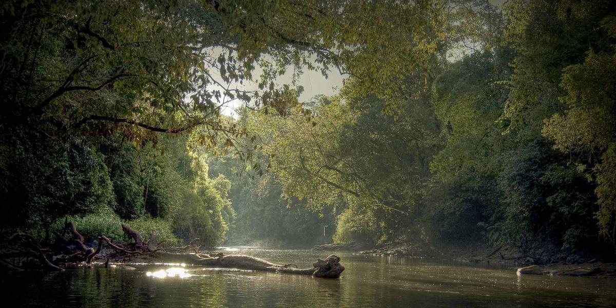 Selva Misionera 2020