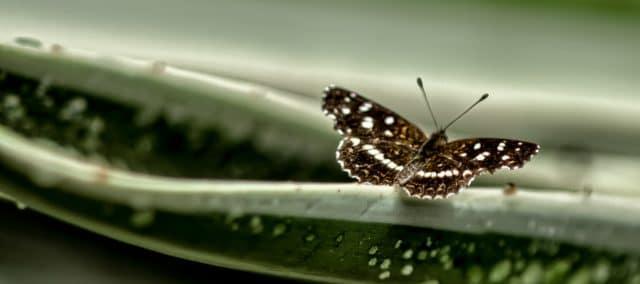 Jardín de las mariposas Misiones 2020